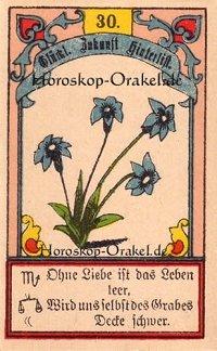 Die Lilien im Steinbock Monatshoroskop an diesem Tag