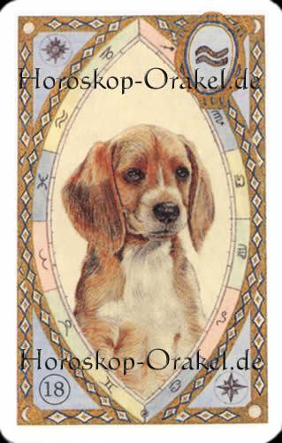 Der Hund, Steinbock Monatshoroskop